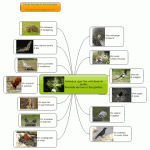 http://www.biggerplate.com/mindmaps/b115231/visual-english-learning-animals-we-see-in-the-garden