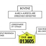 http://www.agriforeste.regione.umbria.it/resources/immagini%20zootecnia/anagrafe_zootecnica.jpg
